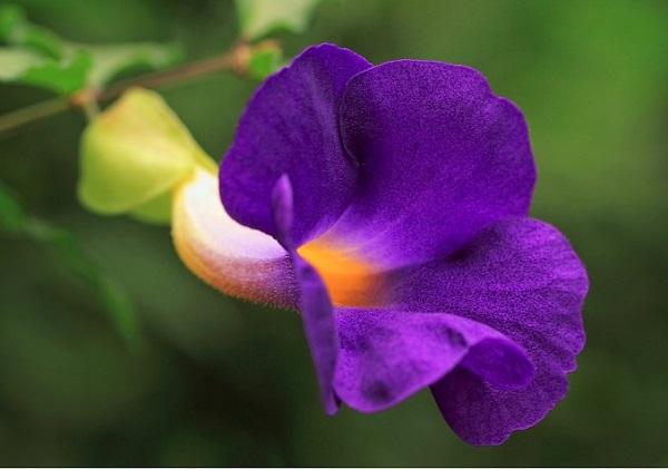 las-mejores-flores-para-cultivar-en-maceta-a-pleno-sol-10