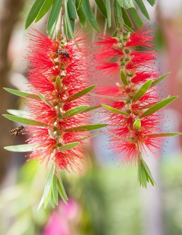 las-mejores-flores-para-cultivar-en-maceta-a-pleno-sol-12