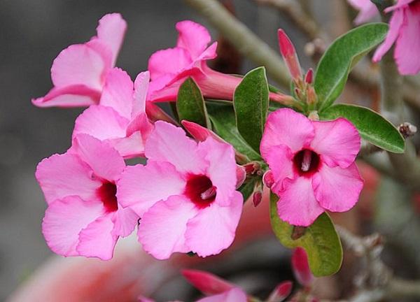 flores para macetas a pleno sol