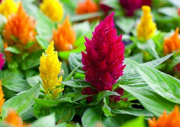 Las mejores flores para cultivar a pleno sol 2 parte - Plantas de exterior resistentes al frio y calor ...