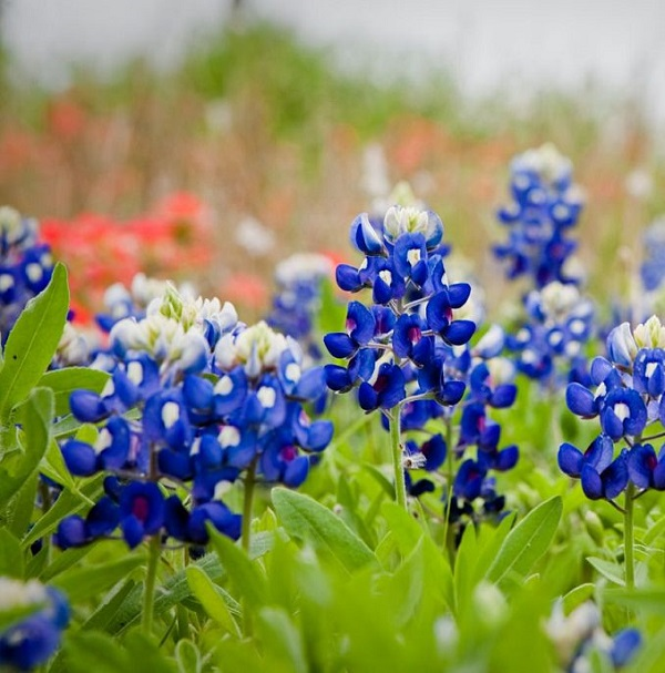 las-mejores-flores-para-cultivar-en-maceta-a-pleno-sol-22