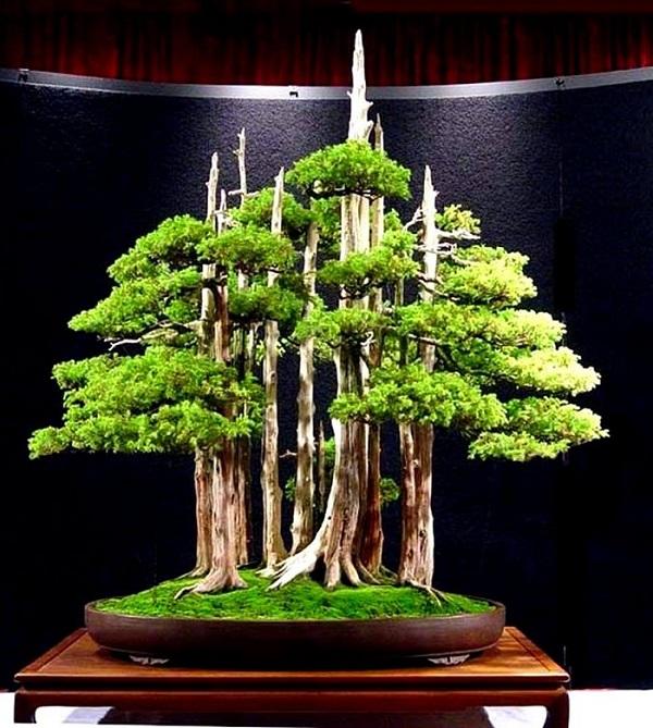 los-mejores-arboles-para-bonsais-08