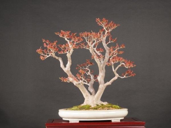 los-mejores-arboles-para-bonsais-09