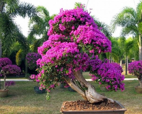 Los mejores rboles para bonsais for Arboles frutales para el jardin