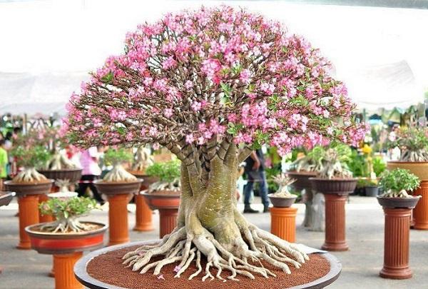 los-mejores-arboles-para-bonsais-14