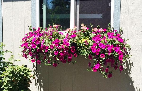 paso-a-paso-para-montar-una-jardinera-en-la-ventana-01