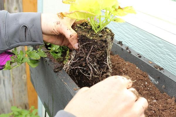 paso-a-paso-para-montar-una-jardinera-en-la-ventana-07