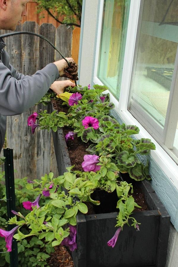 paso-a-paso-para-montar-una-jardinera-en-la-ventana-08