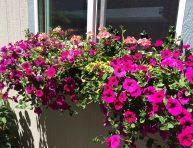 imagen Paso a paso para plantar una jardinera en la ventana