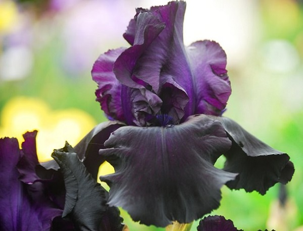 personaliza-tu-jardin-con-plantas-y-flores-negras-05