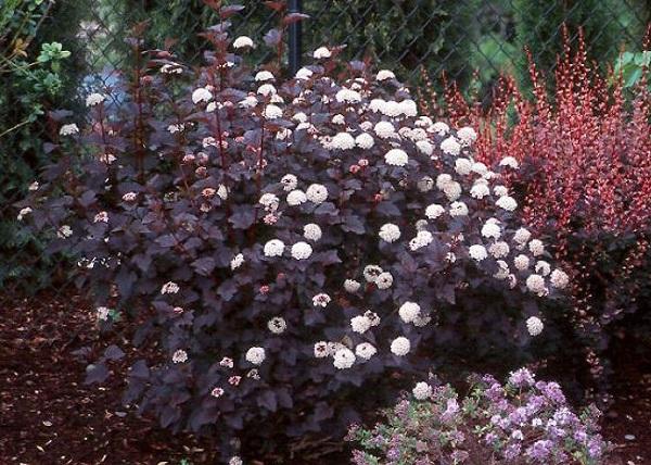 personaliza-tu-jardin-con-plantas-y-flores-negras-06