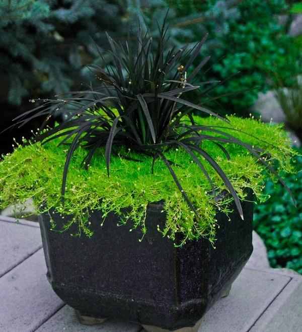 personaliza-tu-jardin-con-plantas-y-flores-negras-12