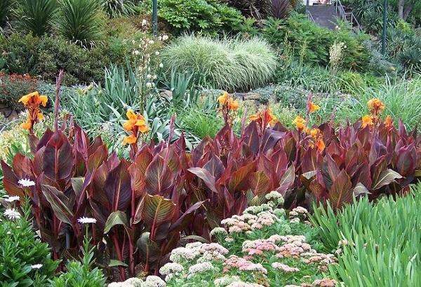 personaliza-tu-jardin-con-plantas-y-flores-negras-14