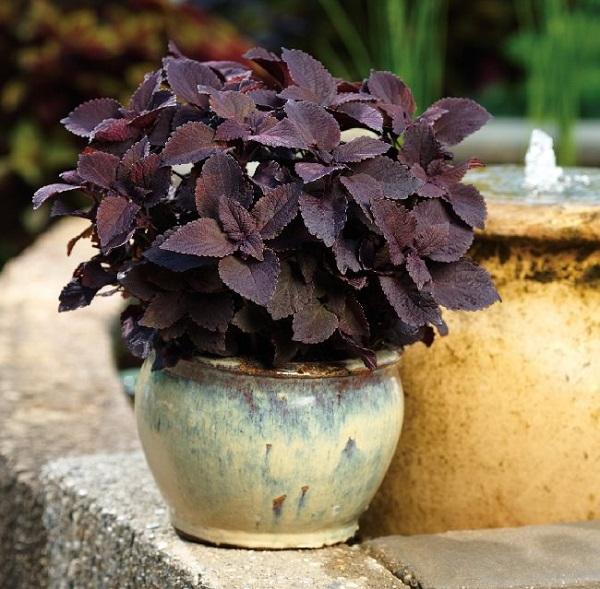 personaliza-tu-jardin-con-plantas-y-flores-negras-17