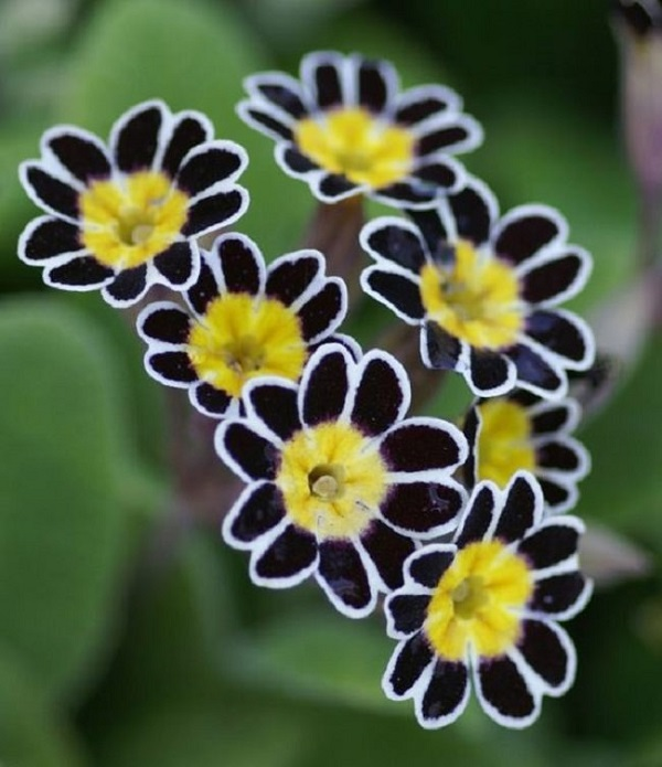Personaliza tu jard n con plantas y flores negras for Matas de jardin