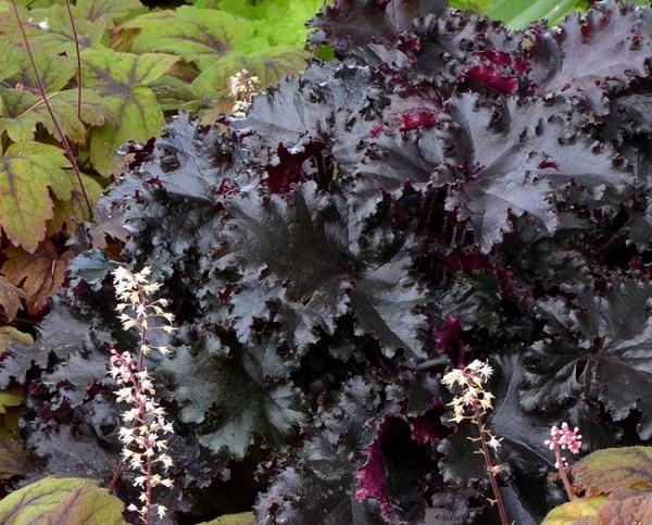 personaliza-tu-jardin-con-plantas-y-flores-negras-19