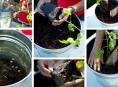 imagen 10 tips para tener una excelente cosecha de tomates