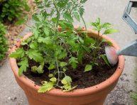 imagen Cómo plantar un jardín de salsa en una maceta
