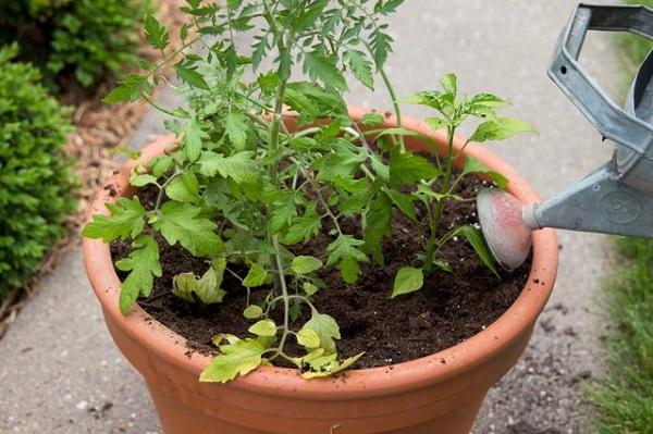 como-plantar-un-jardin-de-salsa-01
