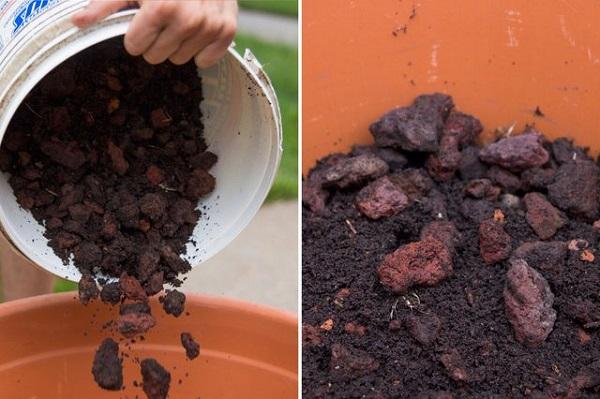 como-plantar-un-jardin-de-salsa-03