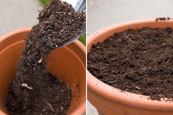 como-plantar-un-jardin-de-salsa-04