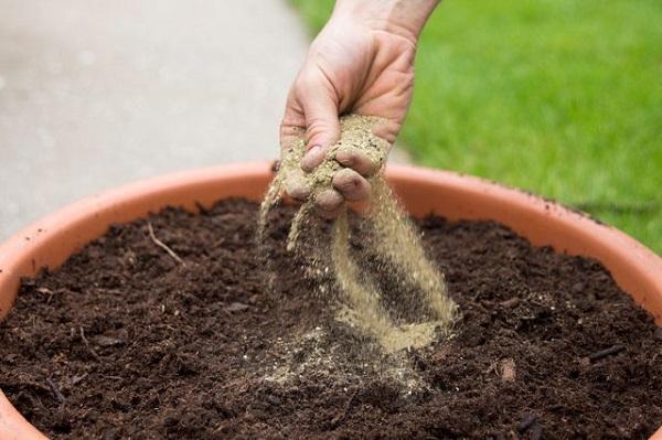 como-plantar-un-jardin-de-salsa-05