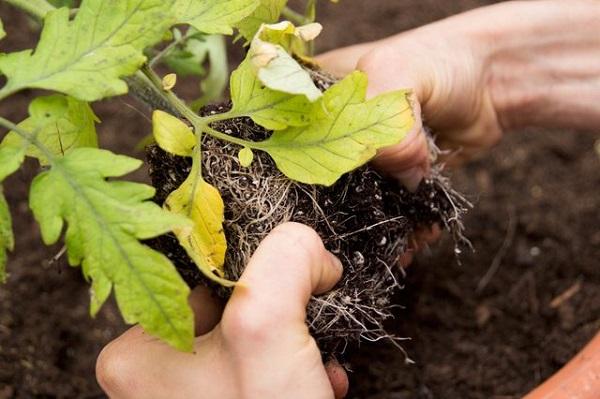 como-plantar-un-jardin-de-salsa-07