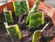 imagen Cómo propagar las plantas de interior
