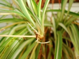 como-propagar-las-plantas-de-interior-04
