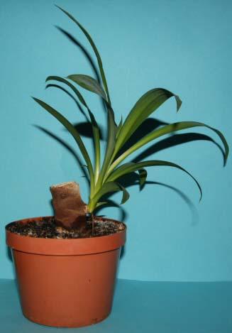 como-propagar-las-plantas-de-interior-05