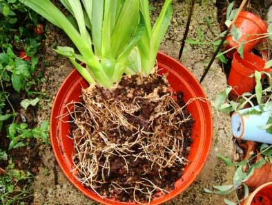 como-propagar-las-plantas-de-interior-08