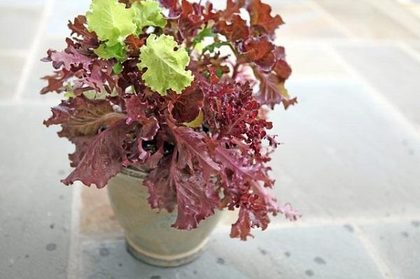 cosecha-tus-lechugas-por-hojas-04