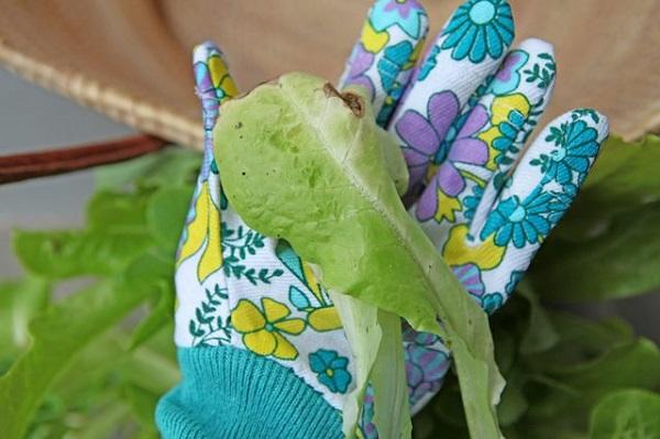 cosecha-tus-lechugas-por-hojas-06