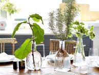 imagen Cultivando plantas en agua