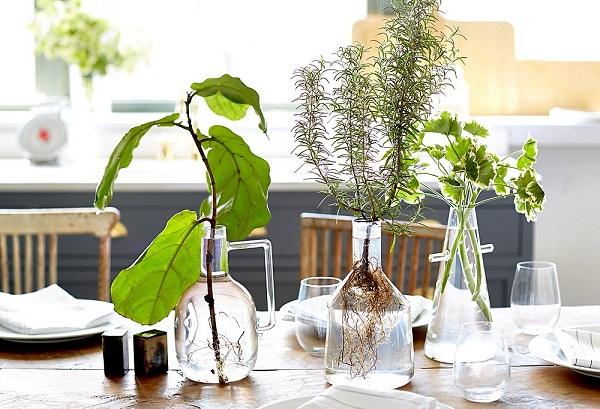 Cultivando plantas en agua - Plantas de agua para interiores ...