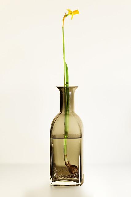 cultivando-plantas-en-agua-03