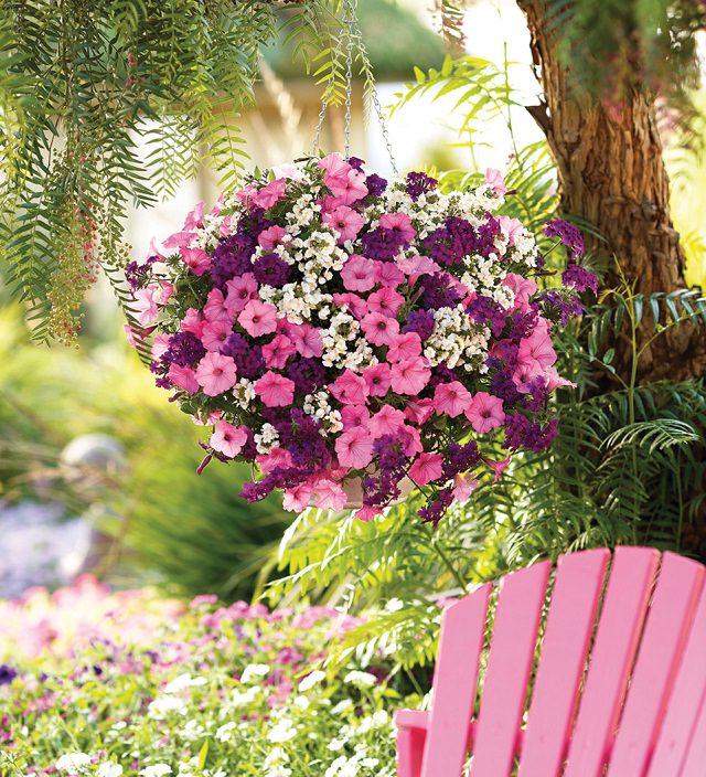las-mejores-plantas-para-cestas-colgantes-02