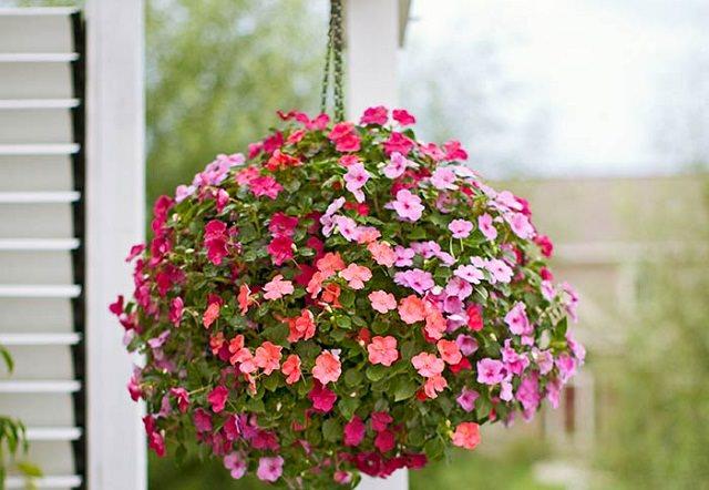 las mejores plantas para cestas colgantes 11 - Plantas Colgantes