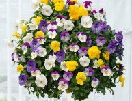 imagen Las mejores plantas para cestas colgantes