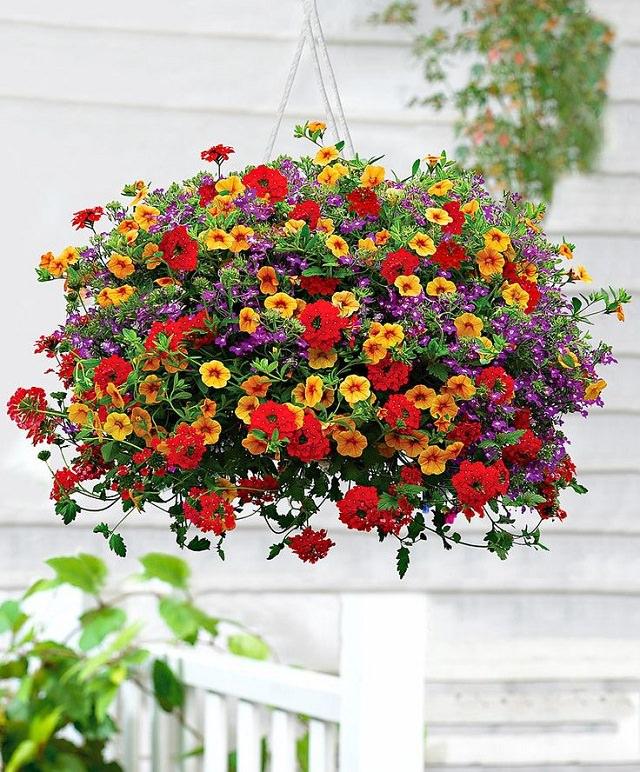 Las mejores plantas para cestas colgantes - Plantas para macetas exterior resistentes ...