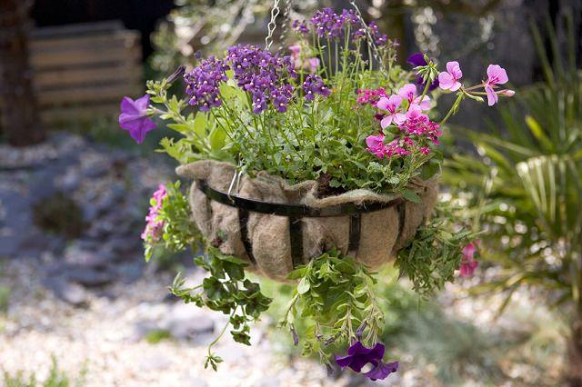 las-mejores-plantas-para-cestas-colgantes-19