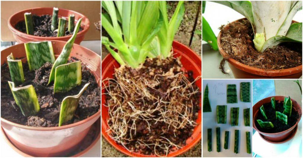 C mo propagar las plantas de interior - Plantas de interior baratas ...
