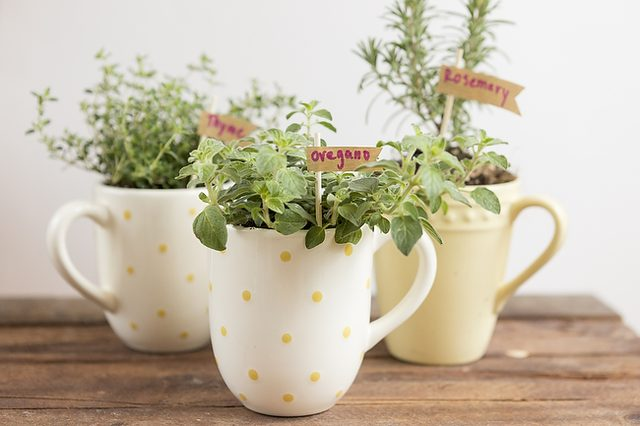 como-cultivar-hierbas-aromaticas-en-tazas-01