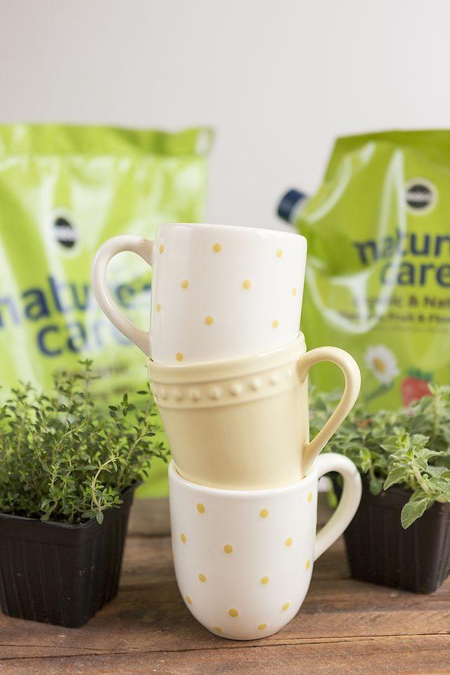 como-cultivar-hierbas-aromaticas-en-tazas-02