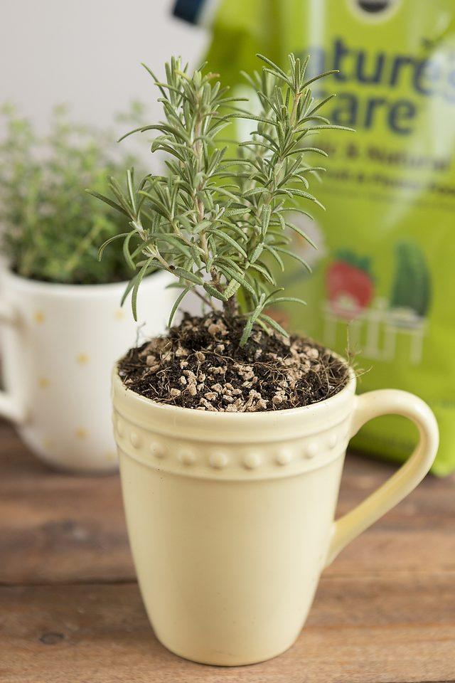 como-cultivar-hierbas-aromaticas-en-tazas-05