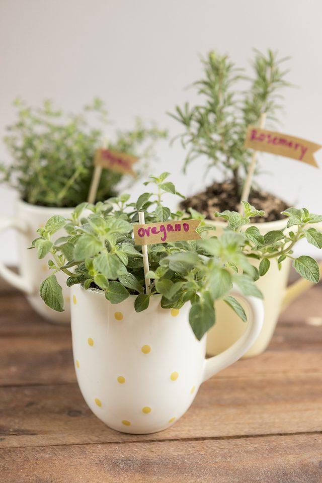 como-cultivar-hierbas-aromaticas-en-tazas-06