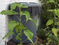 imagen Cómo hacer un depósito para el agua de lluvia