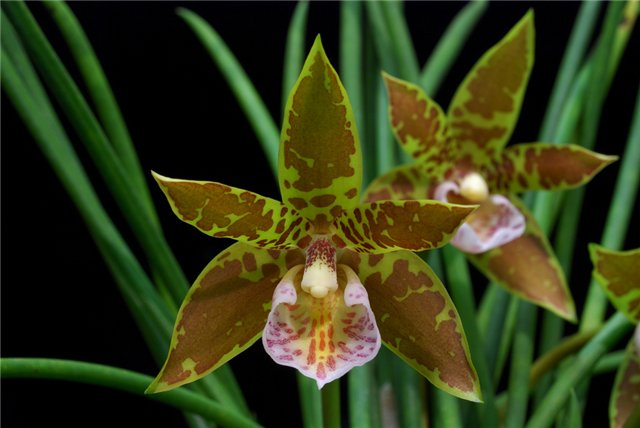 consejos-para-cultivar-orquideas-sanas-01