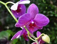 imagen Consejos para cultivar orquídeas sanas