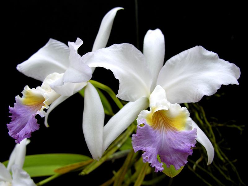 consejos-para-cultivar-orquideas-sanas-05